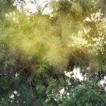 コンタクトレンズの花粉症対策